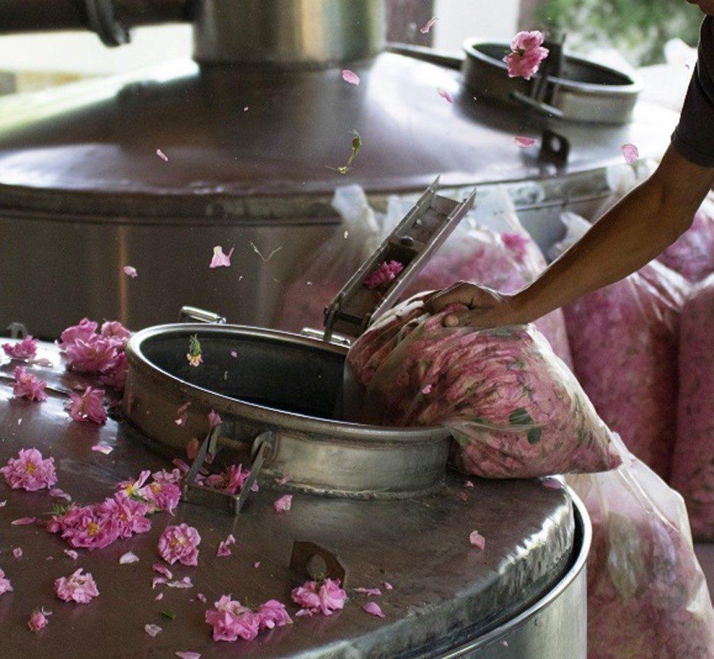 rose-destilery-working-process